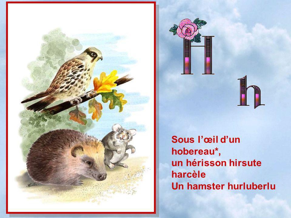 Sous lœil dun hobereau*, un hérisson hirsute harcèle Un hamster hurluberlu