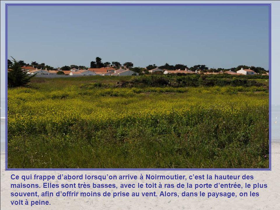 Ce qui frappe dabord lorsquon arrive à Noirmoutier, cest la hauteur des maisons.