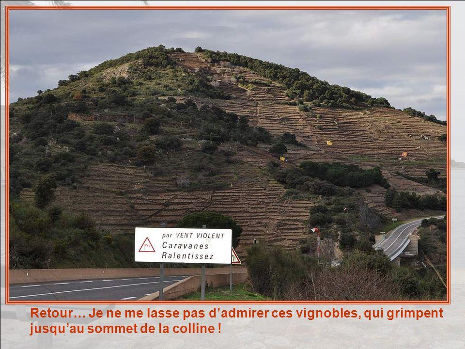 Mais il ne faut pas oublier que Collioure et Port- Vendres sont les haut-lieux du traitement de lanchois .
