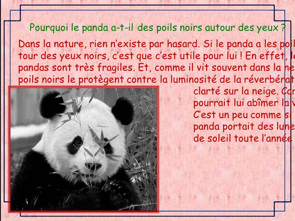 Pourquoi le panda a-t-il des poils noirs autour des yeux .