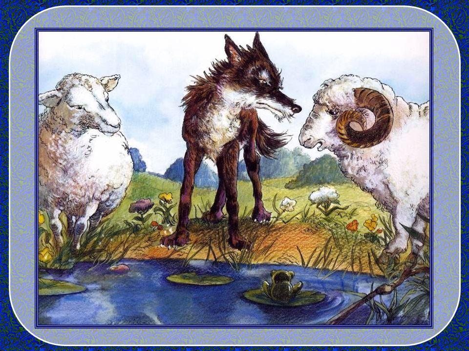 Oui, deux beaux moutons biens gras, occupés à boire à la rivière. Il en remue la queue de contentement, notre jeune loup ! Il sapproche des moutons et