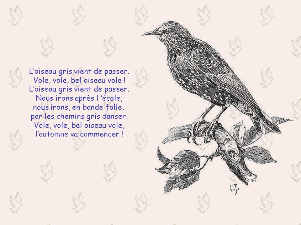 Loiseau gris vient de passer.Vole, vole, bel oiseau vole .