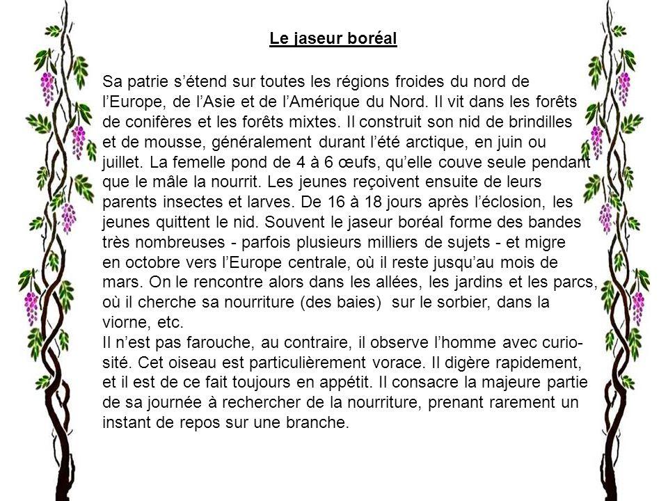 Le jaseur boréal Sa patrie sétend sur toutes les régions froides du nord de lEurope, de lAsie et de lAmérique du Nord.