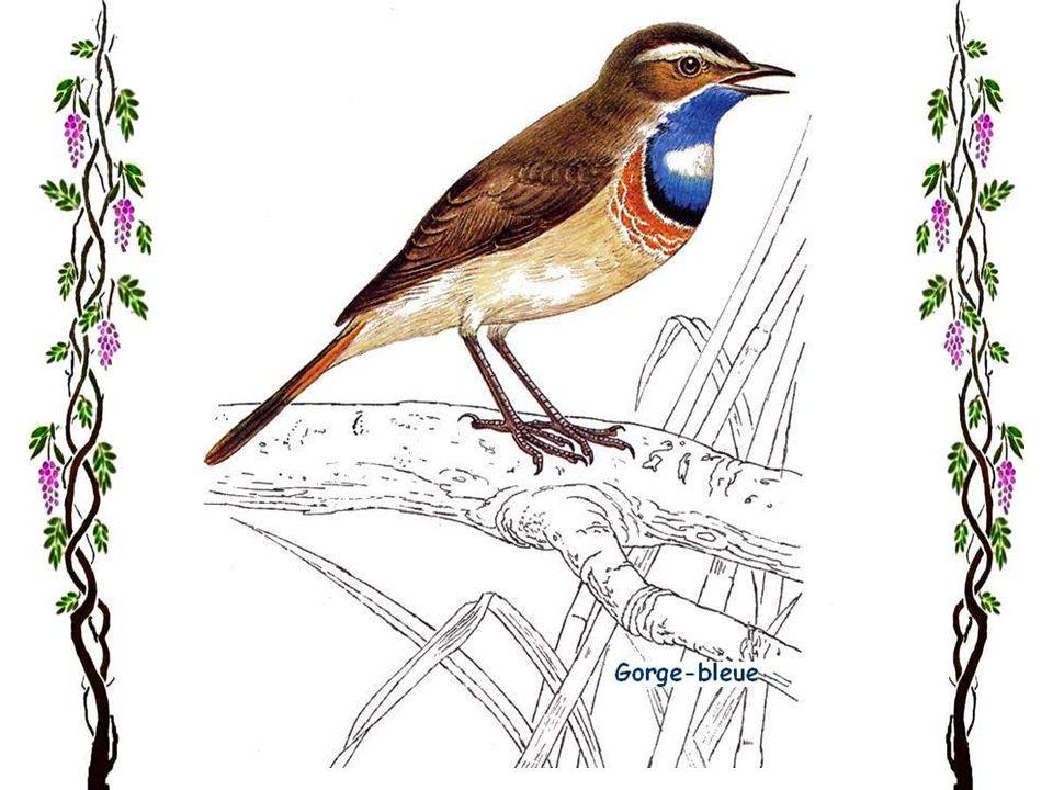 Le roitelet huppé Le plus petit des oiseaux européens, le roitelet huppé, vit presque partout en Europe, hors lIslande et les régions les plus au nord