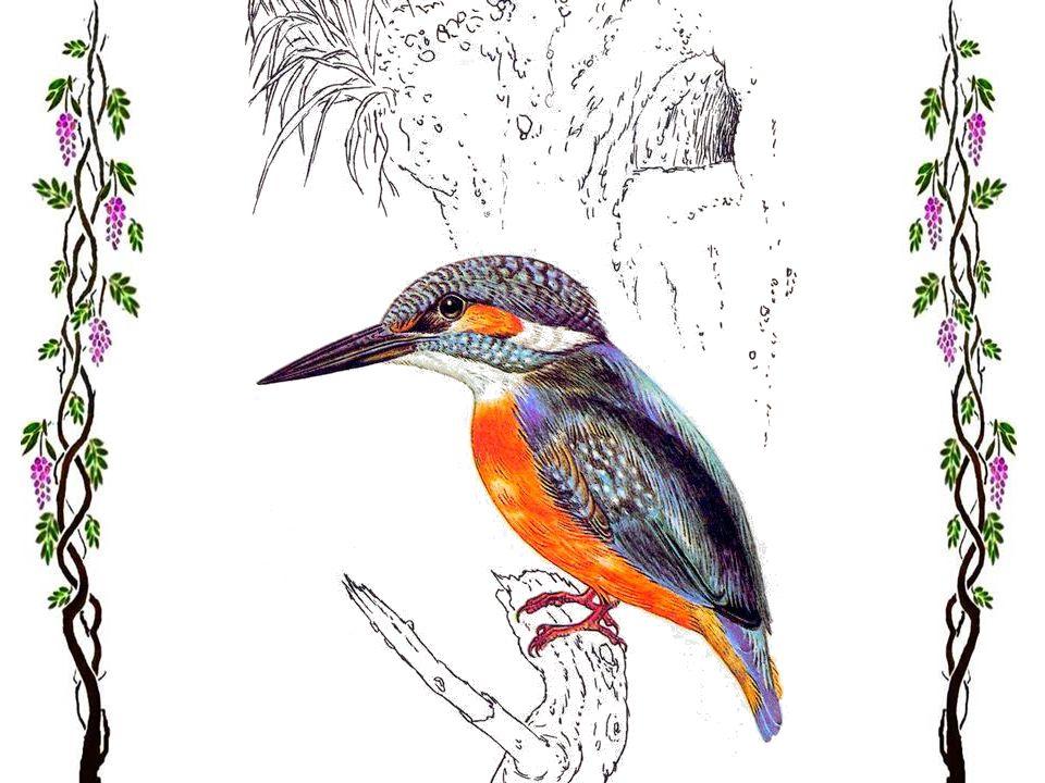 Guêpier Cest lun des oiseaux européens les plus colorés. Il habite les régions tièdes, sud, sud-est et sud-ouest de lEurope et dans les régions les pl