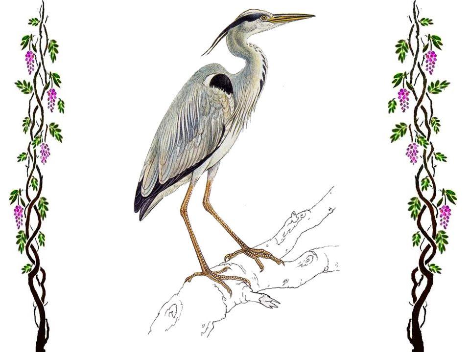 Heureusement, il y a encore des oiseaux ! Il y a en a même davantage, du moins dans notre région. Est-ce dû à un radoucissement de lhiver, ou à un con
