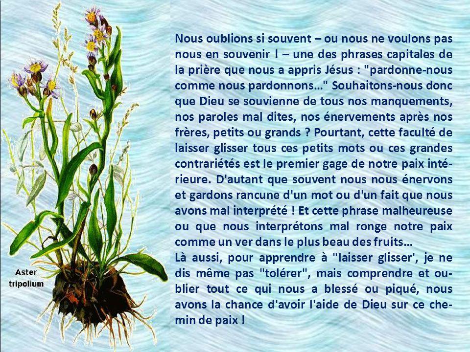 Seigneur Jésus, apprenez-nous…/… à nous dépenser sans attendre d autre récompense que celle de savoir que nous faisons votre sainte volonté. Cette phrase est magnifique.