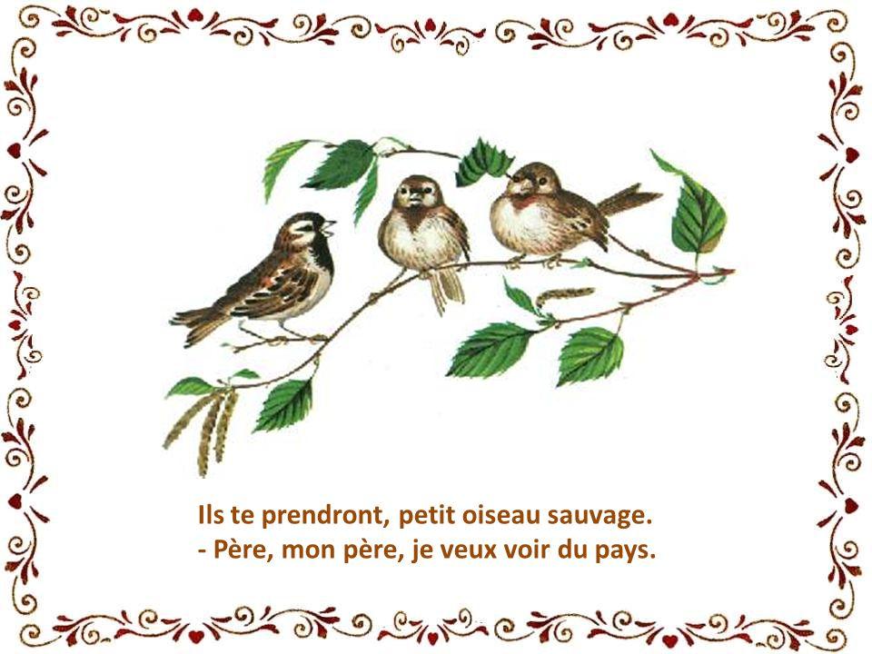 Ils te prendront, petit oiseau sauvage. - Père, mon père, je veux voir du pays.