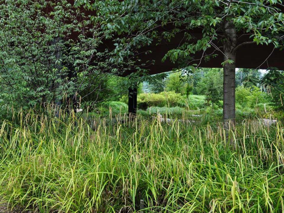 À l'extérieur, une nature exubérante, quoique disciplinée. Il y a des espaces de découvertes ludiques pour les enfants, que nous n'avons pas eu le tem
