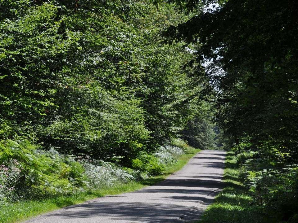 Sous-bois de la forêt de Boiseux.Remarquez comme cette forêt est bien entretenue .
