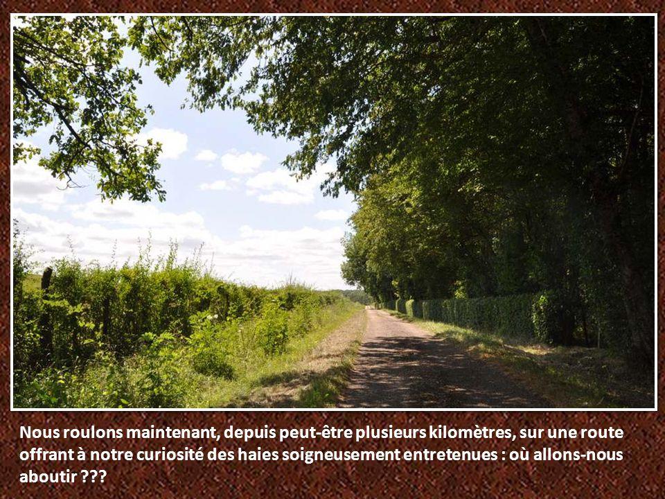 Originaire de Saône-et-Loire, en Bourgogne, de Charolles précisément, la vache charolaise, à la robe et aux cornes blanches, est réputée pour ses qualités maternelles.