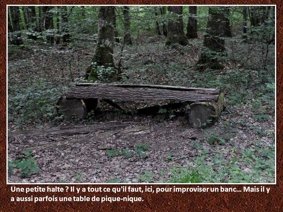 Regardez bien : une cabane se cache là .