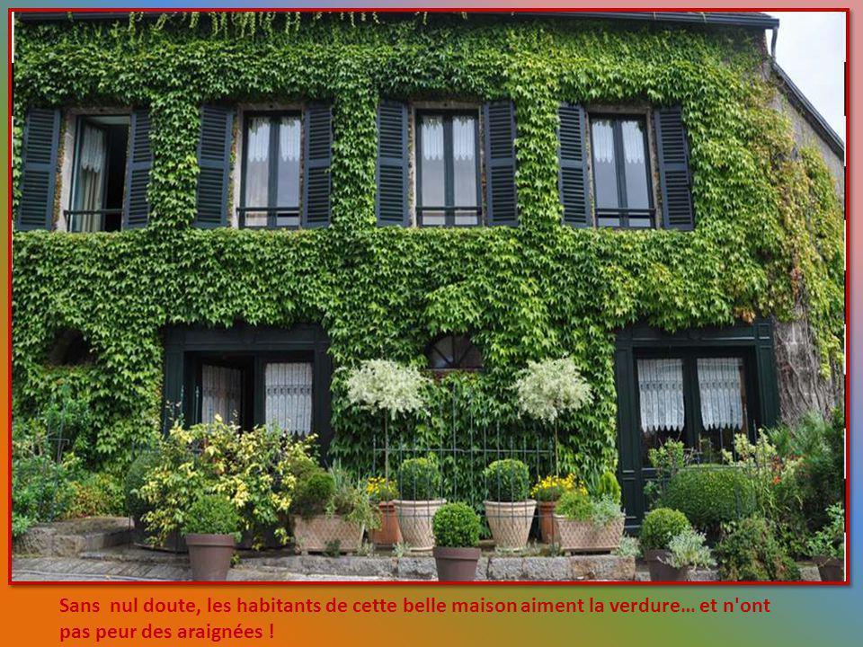 Sans nul doute, les habitants de cette belle maison aiment la verdure… et n ont pas peur des araignées !