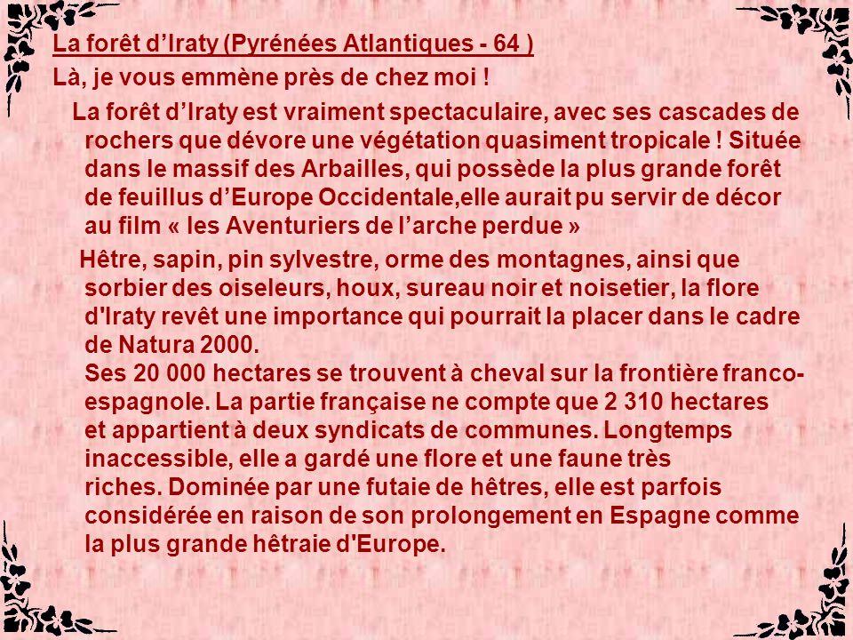 La forêt dIraty (Pyrénées Atlantiques - 64 ) Là, je vous emmène près de chez moi .