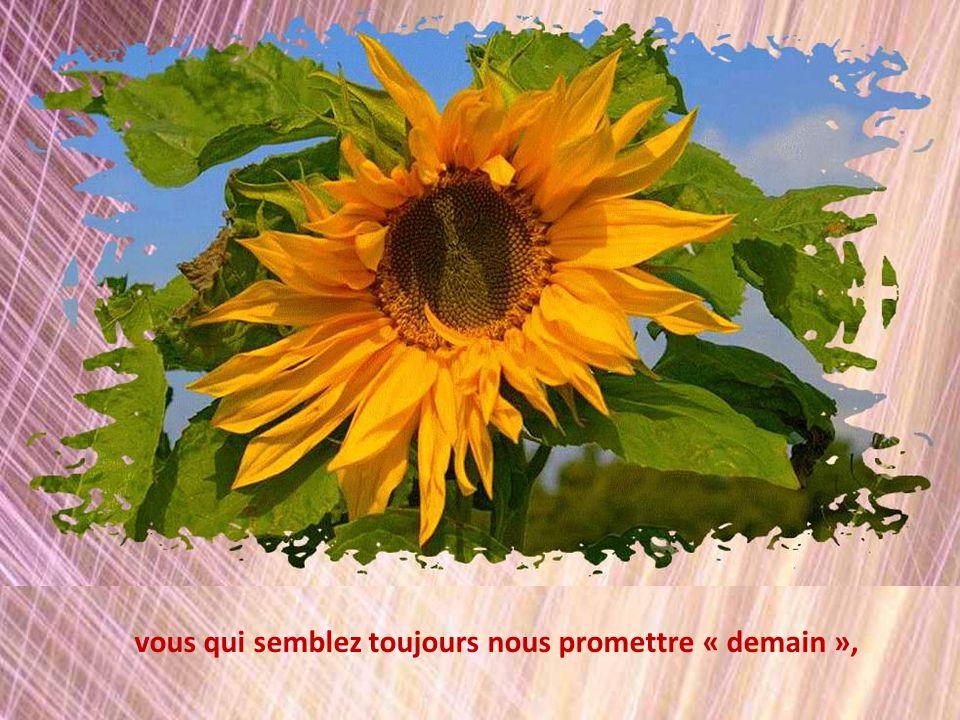 Photos de fleurs de diverses sources, libres de droit.