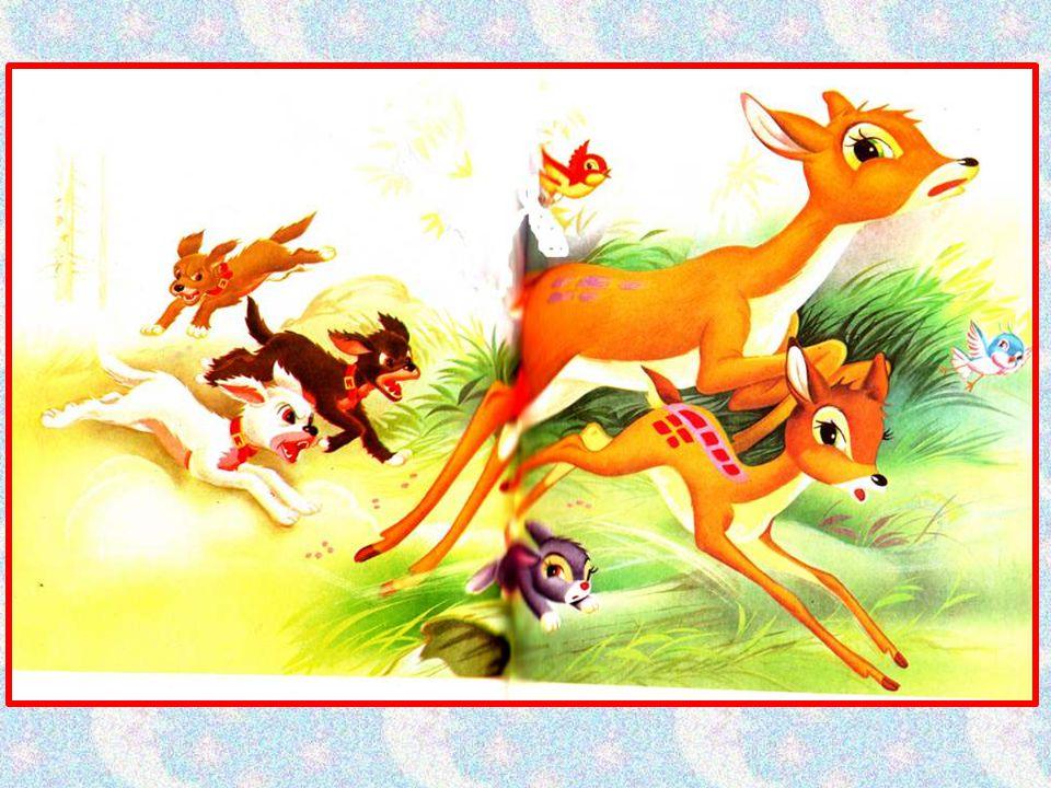 Dans leur course, ils dépassent un lapin qui, lui aussi, court à perdre haleine.