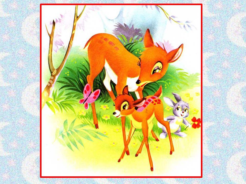 Yoky est un jeune faon qui vient de naître au cœur de la forêt.