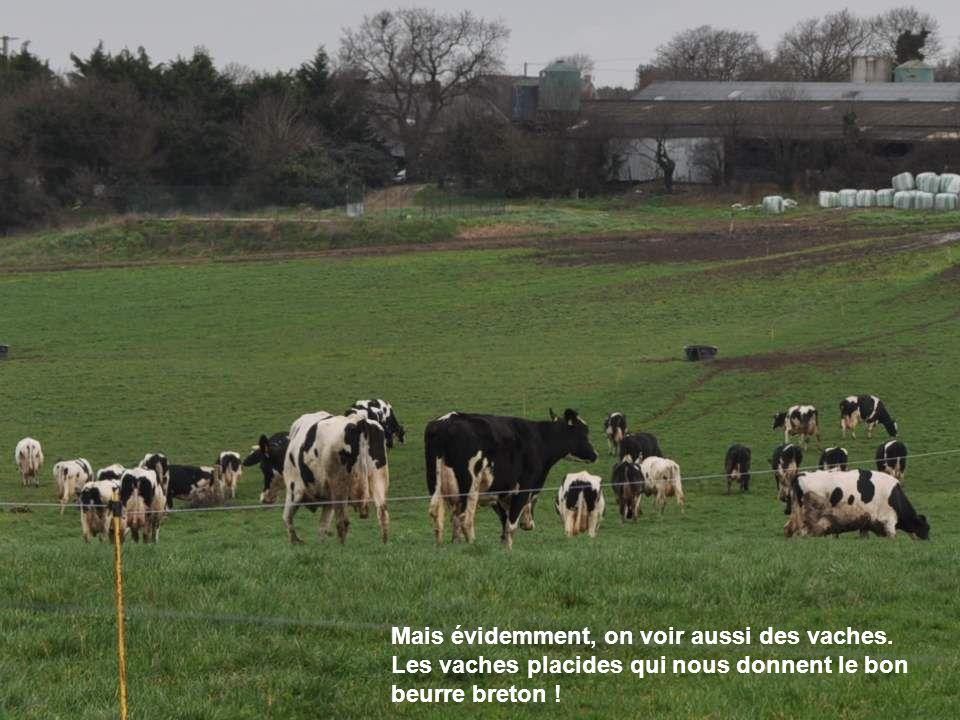 On trouve tous les moulins, en Bretagne : moulins à eau, moulins à farine, et, un peu partout, ces modernes moulins à électricité que sont les éoliennes.