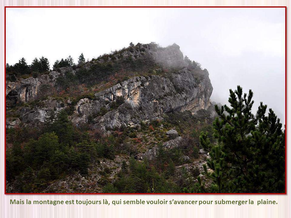 Quelle est belle la Drôme, qui coule paresseusement, se donnant le temps de saluer et dadmirer au passage les fleurs printanières !