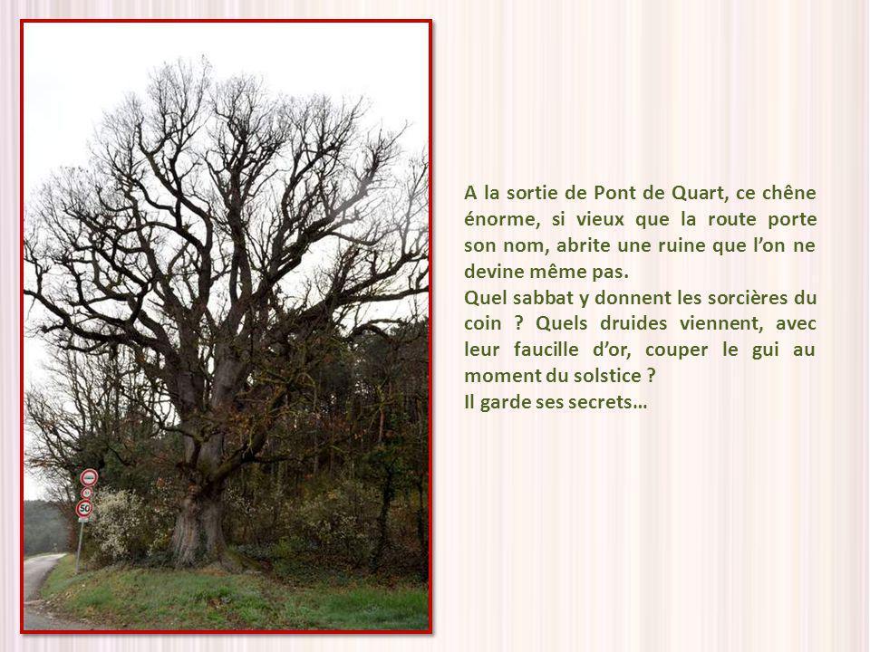 A la sortie de Pont de Quart, ce chêne énorme, si vieux que la route porte son nom, abrite une ruine que lon ne devine même pas.