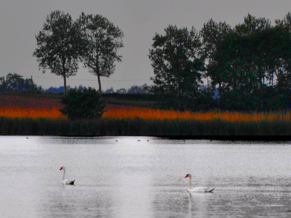 Des étangs… Des oiseaux… de la verdure… de petites routes… Les Dombes, ou la Dombes, région de lAin, ma émerveillée .