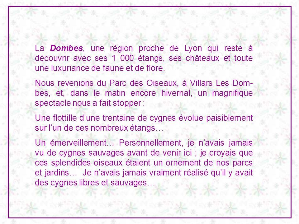 La Dombes, une région proche de Lyon qui reste à découvrir avec ses 1 000 étangs, ses châteaux et toute une luxuriance de faune et de flore.
