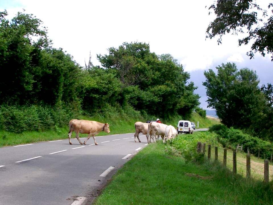 Le Béarn, région des Pyrénées Atlantiques, MA région, même si je me suis exilée pour un temps indéterminé, est un pays délevage.