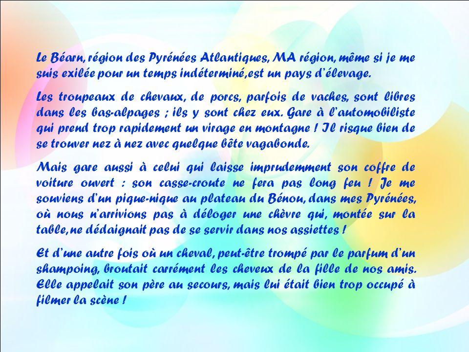 Photos : Yvonne Texte : Jacky Musique traditionnelle bretonne : Laridé de Kerlescan Diaporama de Jacky Questel, ambassadrice de la Paix Jacky.questel@gmail.com http://jackydubearn.over-blog.com/ Site : http://www.jackydubearn.fr/http://www.jackydubearn.fr/