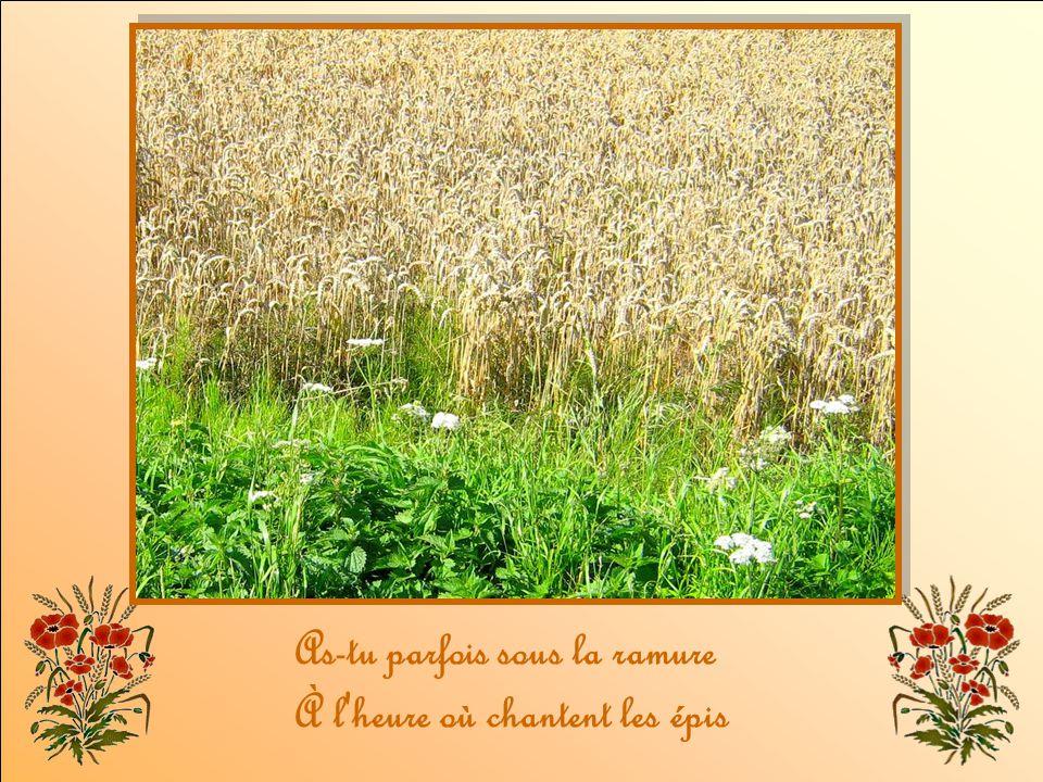 Nous irons écouter La chanson des blés d'or. (bis)