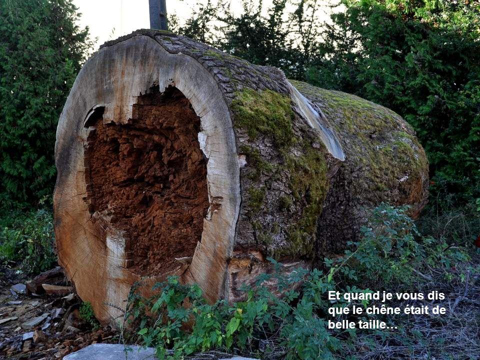 Vomécourt possédait, devant l entrée principale de son église, côté sud, un chêne remarquable âgé de plus de trois cents ans.