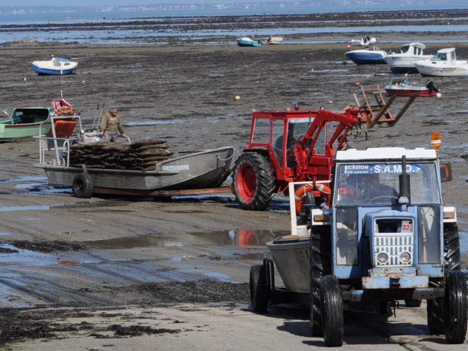 Pour nous, terriens ignorants, il est fascinant et presque incroyable de penser que cet espace boueux, que se disputent tracteurs et bateaux échoués,