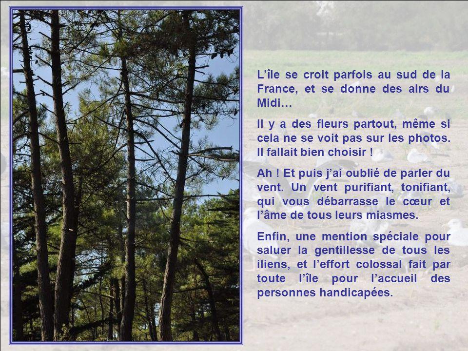 Lîle se croit parfois au sud de la France, et se donne des airs du Midi… Il y a des fleurs partout, même si cela ne se voit pas sur les photos.