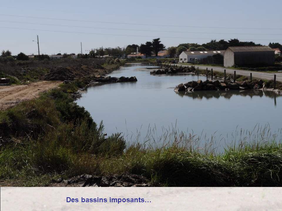 Des bassins imposants…