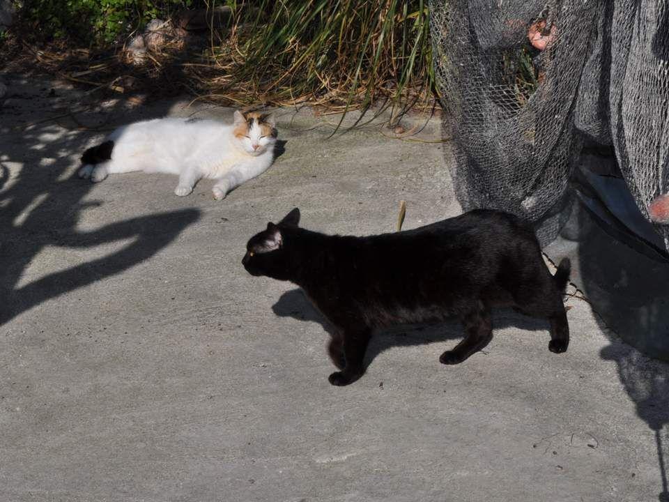On a l'impression d'avoir découvert un monde oublié… Et des chats, des chats Partout…