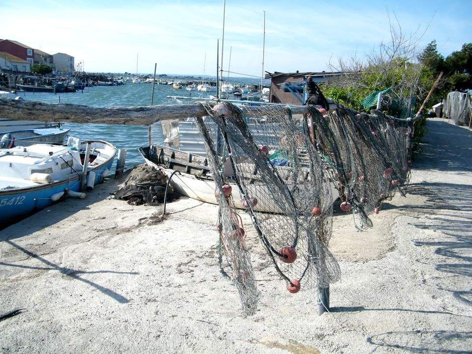 Il n'y a pas que les femmes qui attendent le retour des pêcheurs !