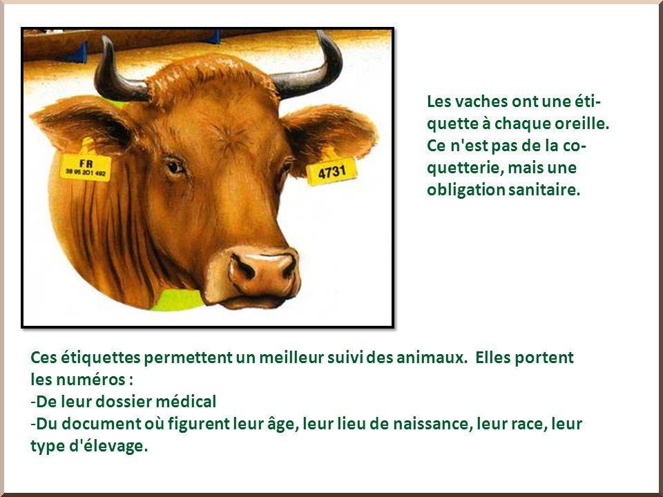 On trouve aussi dans le commerce du lait de brebis ou de chèvre, mais aussi des laits végétaux : de soja, de noix de coco, de riz, damende…