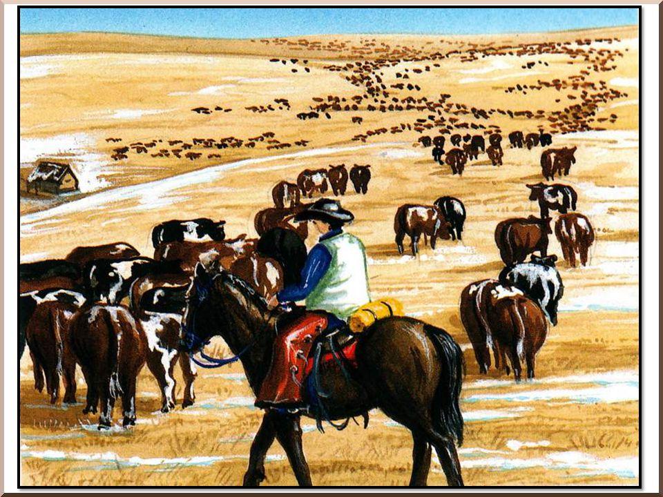 Dans l Ouest américain, les éleveurs de bo- ins possèdent des milliers de bêtes.