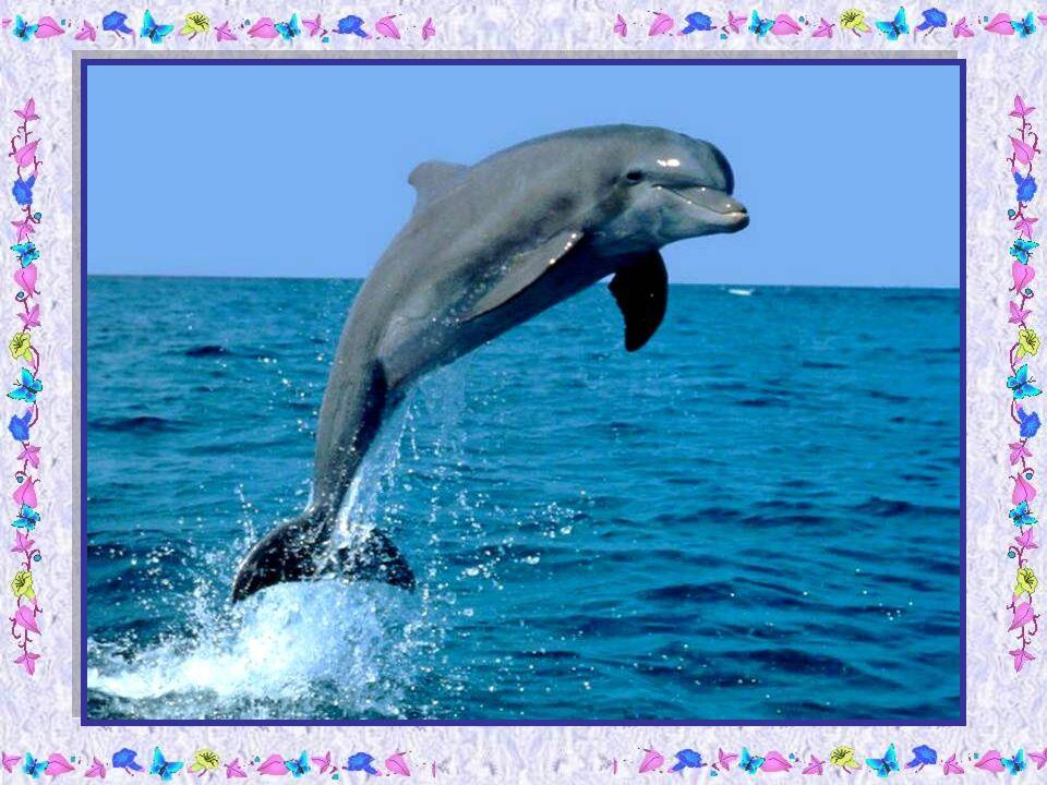 Le papa dauphin dit alors