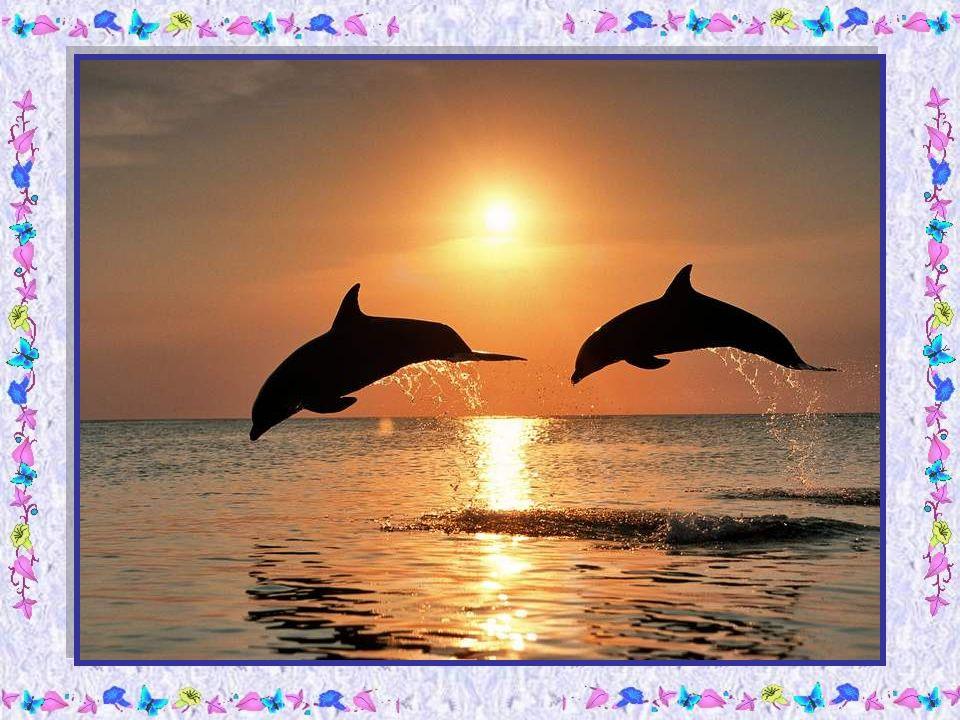 Le papa dauphin narrivait pas à la suivre et les petits étaient loin derrière.
