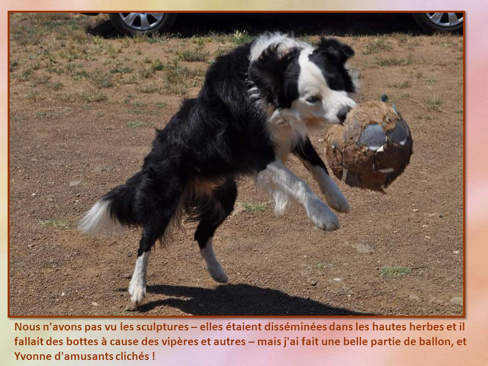 Et bien non . C est un chien foot- balleur.