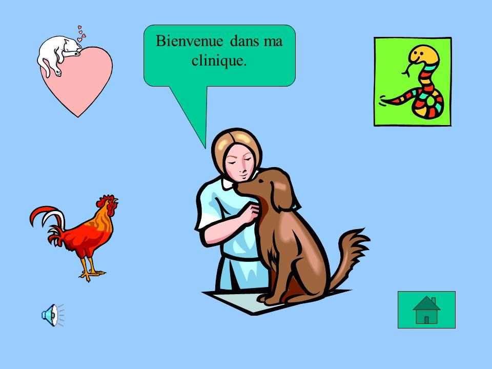Le rêve de Cassandra Je rêve de devenir vétérinaire pour soigner les chiens malheureux.