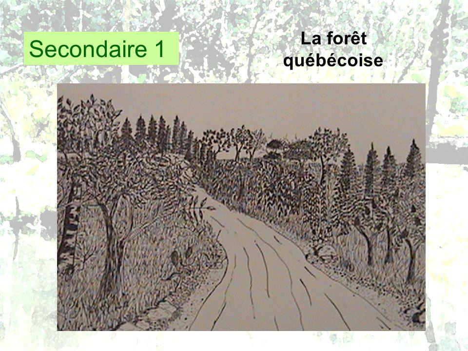 Secondaire 1 La forêt québécoise