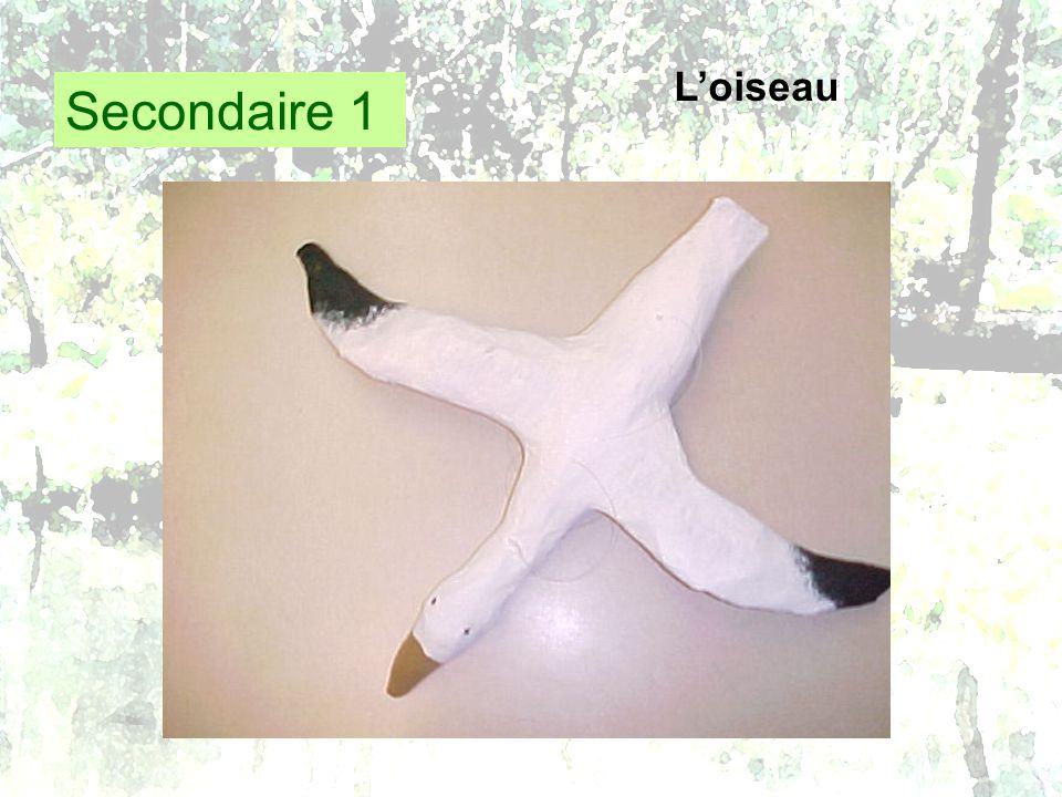 Secondaire 1 Loiseau