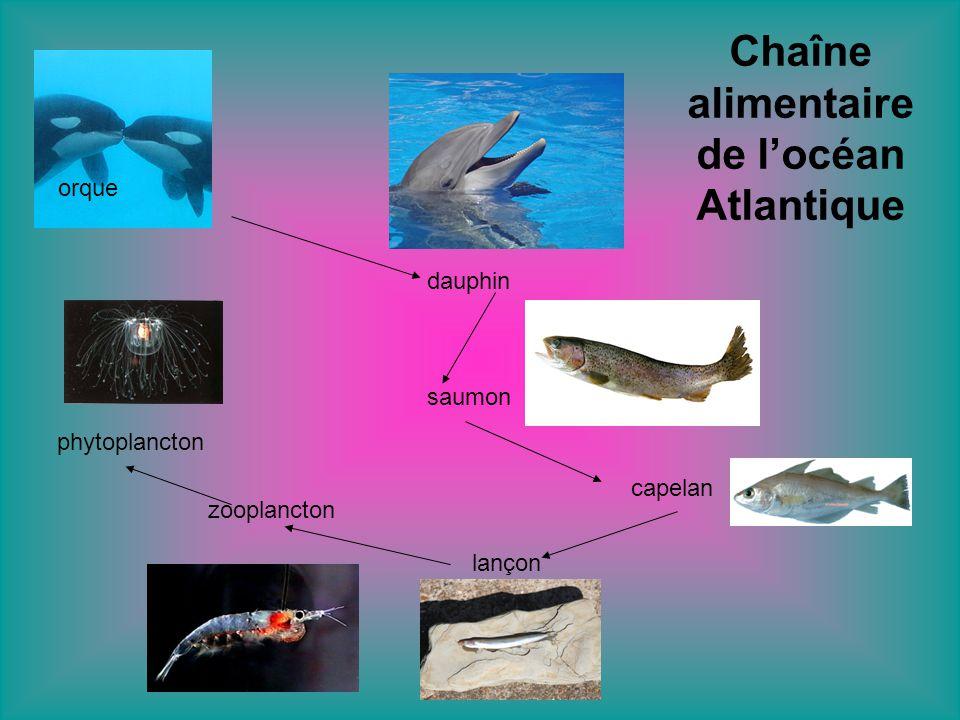 Voici quelques animaux qui vivent dans locéan Atlantique.