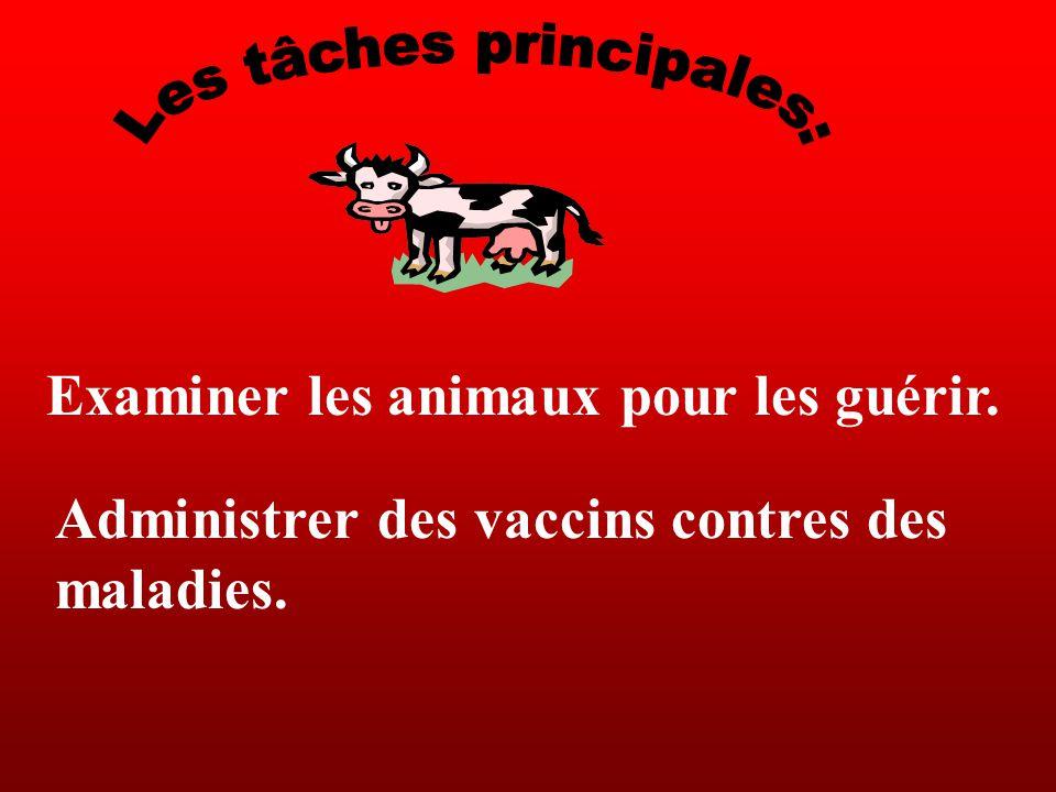 Vétérinaire de vaches