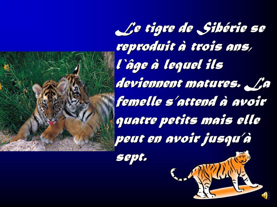 Il y a beaucoup de sous- espèces de tigres comme le tigre de Bengale, le tigre de Sibérie, le tigre de lAmour, le tigre de Sumatra, le tigre dIndochin