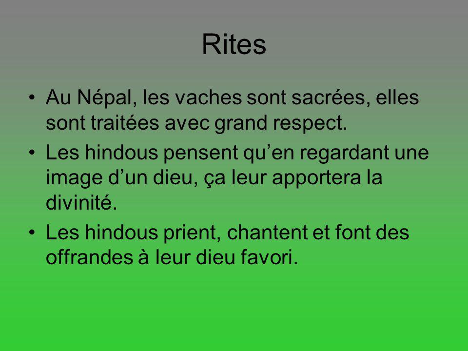 Rites Au Népal, les vaches sont sacrées, elles sont traitées avec grand respect. Les hindous pensent quen regardant une image dun dieu, ça leur apport