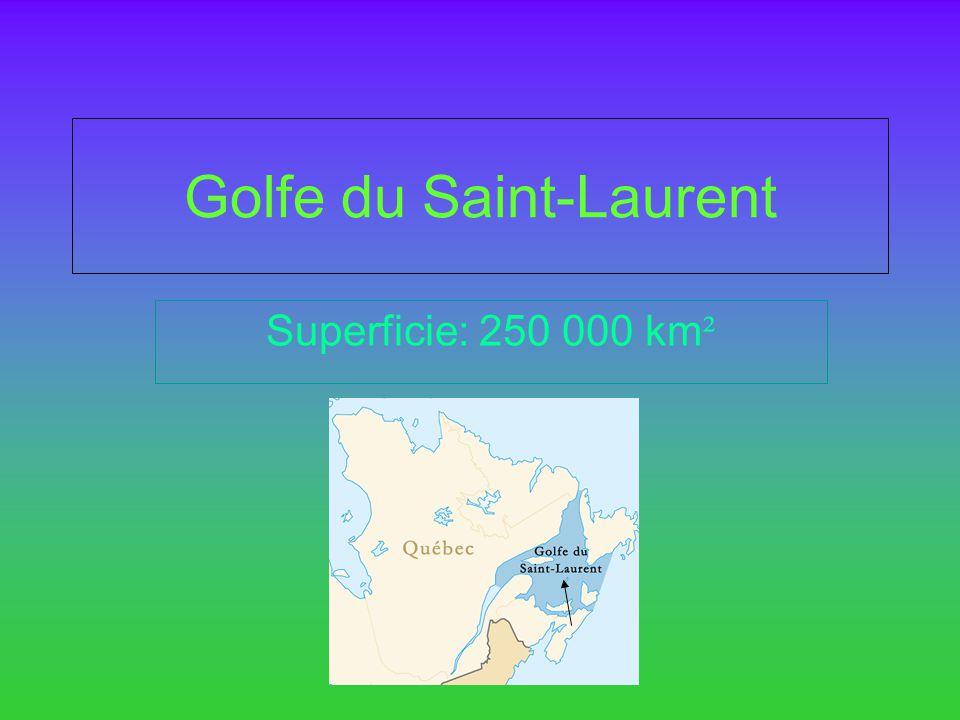 Golfe du Saint-Laurent Superficie: 250 000 km ²