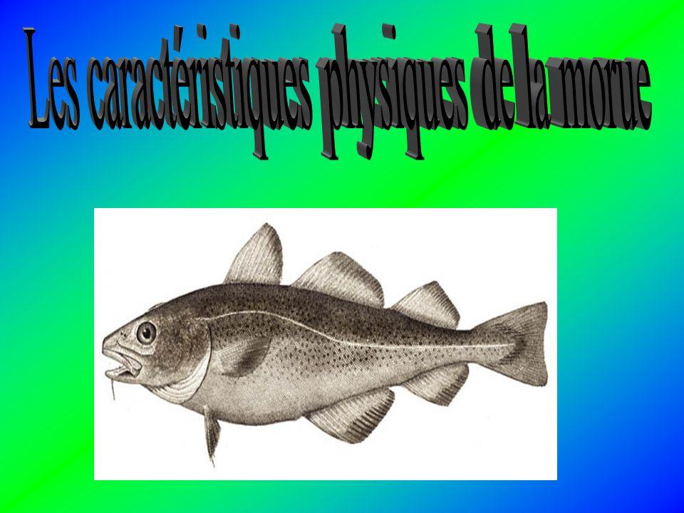 La morue se nourrit de petits crustacés vivants, dont le plancton, tandis que les jeunes morues consomment surtout des crevettes, des amphipodes et de
