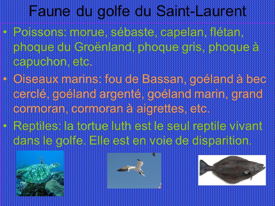 Faune du golfe du Saint-Laurent Poissons: morue, sébaste, capelan, flétan, phoque du Groënland, phoque gris, phoque à capuchon, etc.